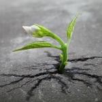 flower-tree-growing-concrete-pavement-101
