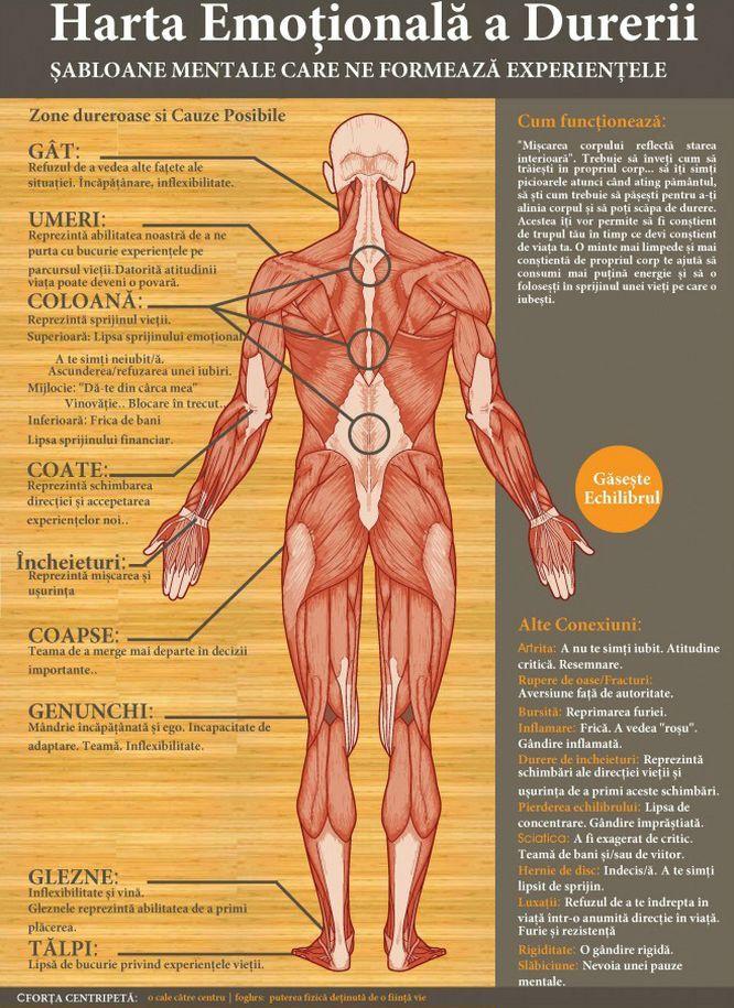 Harta emorionala a durerii